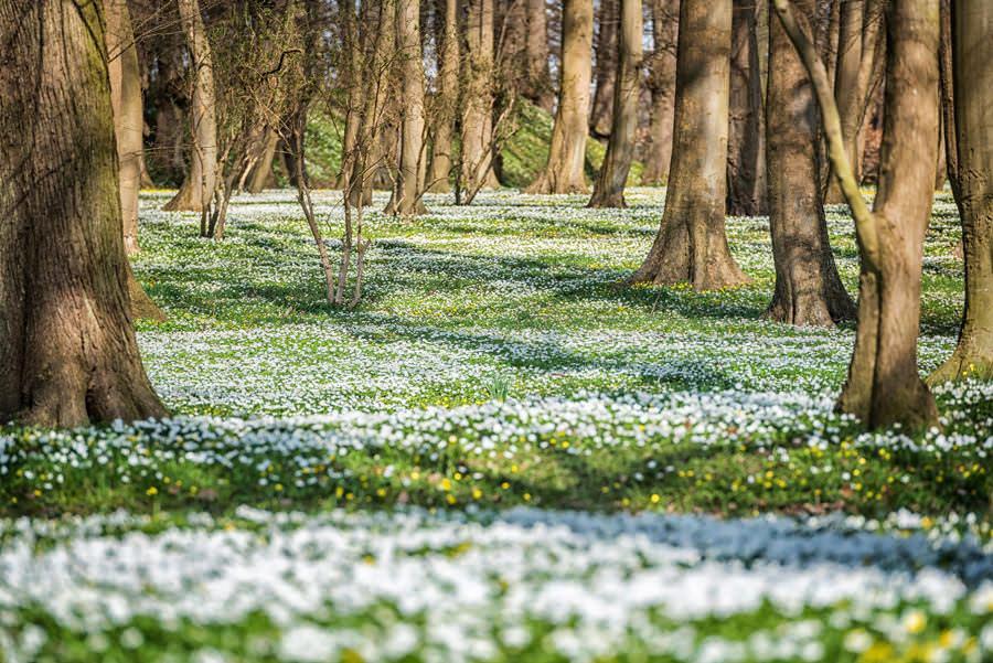 Ostern auf Rügen verbringen – Blumenwiese im Schlosspark Putbus